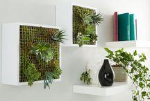 DIY Pflanzen: Sukkulenten