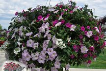 New Garden Plants for 2014 / A wonderful mix of great #new #annuals, #perennials, and #shrubs coming to the market for 2014! Many of the shrubs you will only find at Garden Crossings