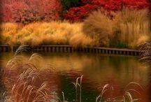Autumn Days (Board 4) / by Carol Goff-Reese