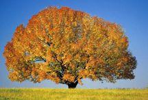 ağaçlarım