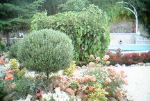 My Garden - personal / My garden which is part of my home in Damasus