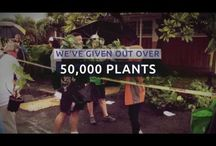 Arbor Day in Hawaii / Every year, Hawaiian Electric, Maui Electric, and Hawaii Electric Light celebrate Arbor Day by helping to give away thousands of plants on their respective islands.