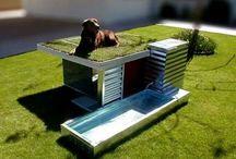 Dog Modern House