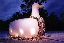 Long Island Big Duck