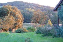 Jura-Jardin de la maison d'hôtes et du gite à Darbonnay - / Ce jardin commence à s'étoffer ...... d'arbustes et d'arbres moins courants qu'ailleurs