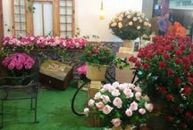 Roses Meilland Proflora 2015 - Colombia. / Meilland Booth at PROFLORA, Colombia, 2015 © Meilland International