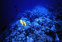 Me Diving ;-)