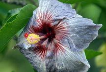 Растительность / Цветы,деревья,листья и т.д.