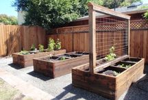 Veggie gardens and fruit