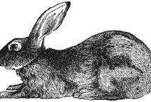 Bunnybunnybunny