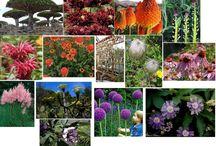 I Like Plants: Dr Seuss Garden