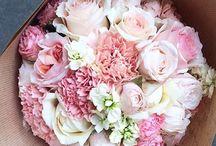 Blush/Petal Pink