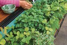 plants n herbs