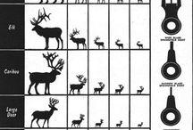 Hunting / Hunting animals