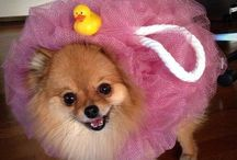Halloween for Dogs + Cats / Your guide to Halloween with pets, including the cutest and funniest Halloween costumes for cats and dogs!