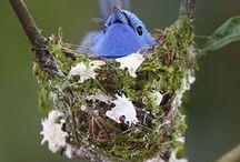 si 自然・鳥 &
