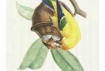 Oiseaux brillians de Brésil from Jean Théodore Descourtilz