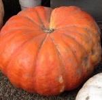 Halloween Bonkers Blog