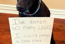 Guilty Dogs / These guilty dogs will make you howl with laughter!