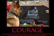 Animal Heroes  / Animal heroes, including service animals, therapy animals, Military Working Dogs, search and rescue, . . . and those who save their people!  / by Jane Laycock