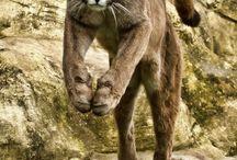 Big Cats, little cats / All kinds of felines