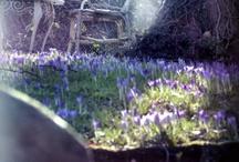Springlike