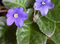 növények titka