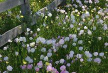 garden inspiration / kert inspiraciok