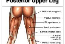 Stretching & Anatomy of human body