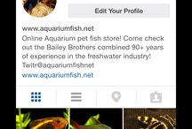 Social Media / Here's where you can follow allow our social media updates. Keep up to date with all of our newest and coolest arrivals! / by AquariumFish.net