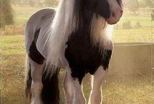 -ron sommers / foto,s van paarden