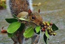 Ecureuils, Lapins et autre petits animaux. / Ecureuils, lapins, hamsters, furets ,rats, cochon d'inde,  etc..... / by Renée