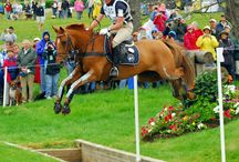 Cross country/eventing