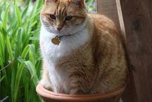 cat + box