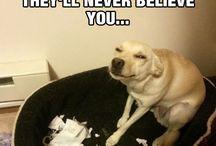 funny! :)