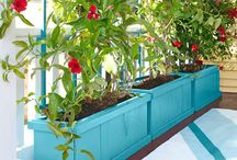 Lots and lots of planter boxes / by Erica York Corron