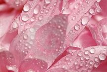 PINK / Pink: Unconditional Love ~ Beauty ~ Femininity ~ Loving Passion ~ Kindness ~ Compassion
