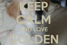 Keep calm and love golden retrievers