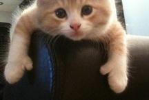 Adorably Precious
