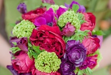 Bold colours / Purple,red,pink,green