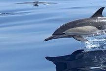 amorosi delfini