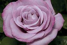 Beautiful Gardens & Gardening Tips.  / by Jess