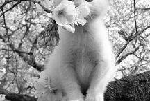 cute animals b & w / by * dahlia *