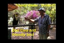 Dan Civa - Human Animal slide show