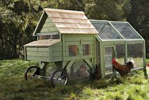 Ideas for my chickens