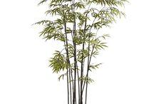 benti növények