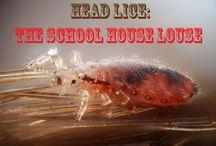 school ideas / by Liz Jankay