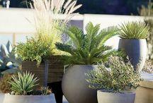 Arrangement plantes ext