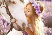 Lavender and horses