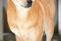 Dog Breeds / Information on all the different amazing dog breeds out there!